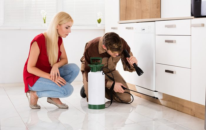 Must-Have Pest Solution Items for Your Home