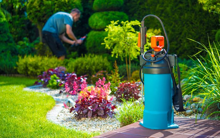 A Step by Step Procedures of Pest Control for Beginners