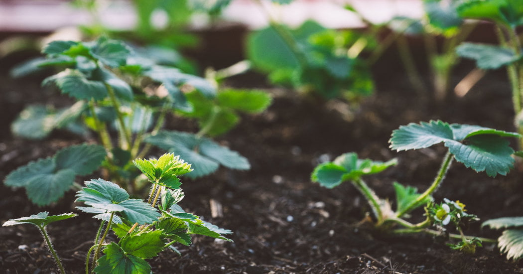 How to Grow a Victory Garden of Any Size