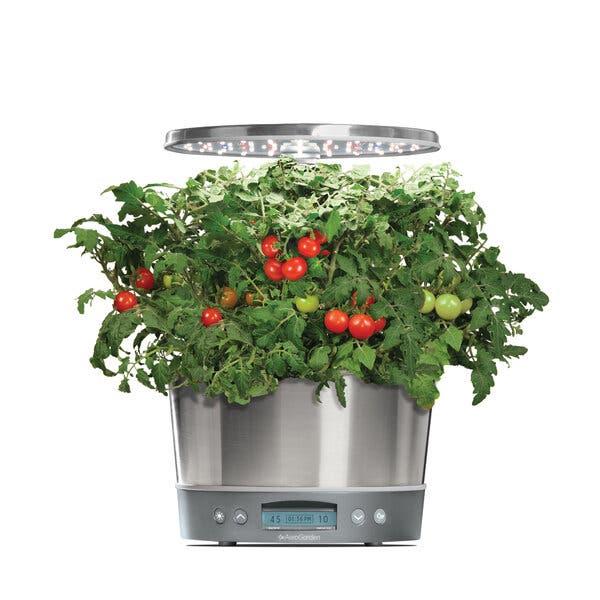 Grow a Hydroponic Garden