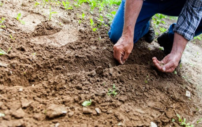 Simple Tips and Tricks That Will Improve Your Gardening Skills