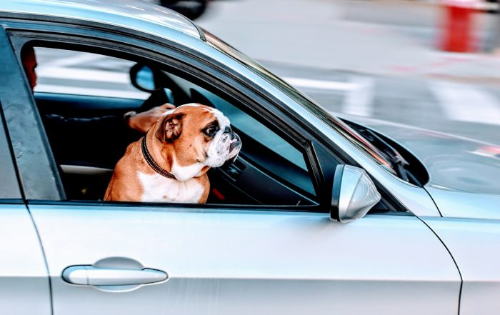 All You Need to Know Before Taking Your Pet on a Holiday