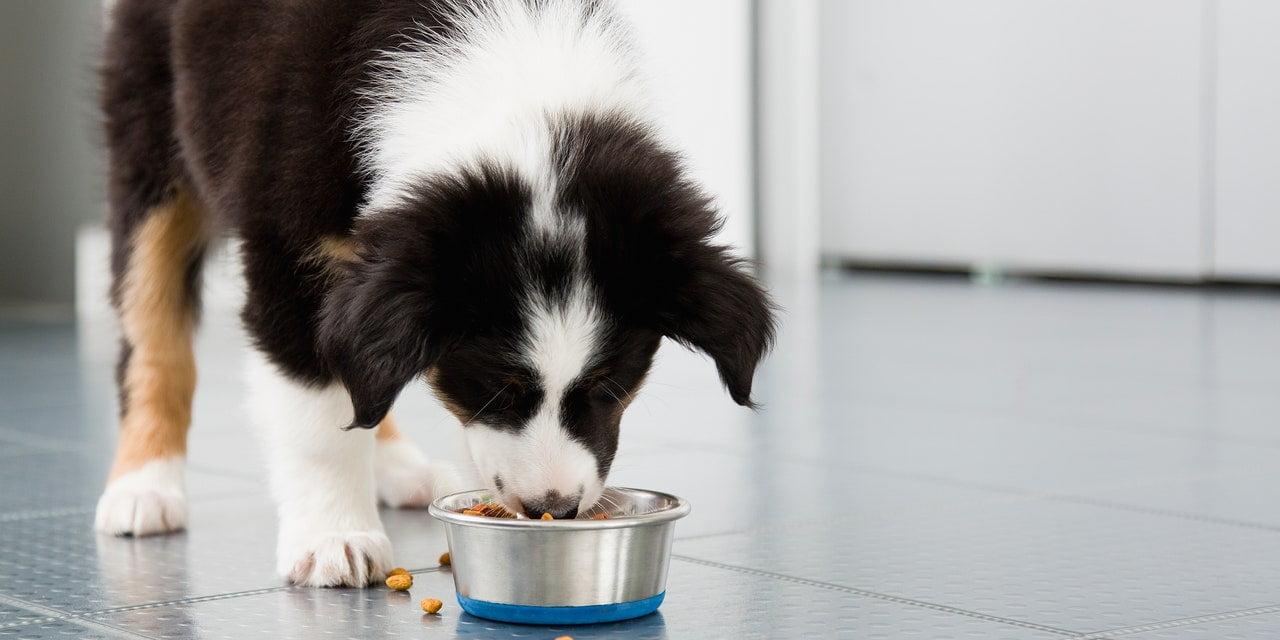 The FDA Expanded a Dog Food Recall After More Than 70 Dogs Died
